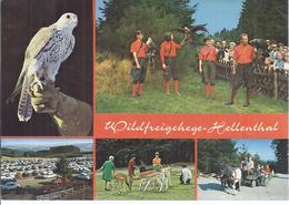 AK-30892 -   Wildfreigehege Hellenthal  Bei Euskirchen  Mehrbild (5) - Euskirchen