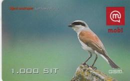 Slovenia - Rjavi Srakoper / Red-Backed Shrike (Lanius Collurio) - Slovenia