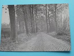 VURSTJENDREEF Evergem ( Uitg. W.S.V. Buitenbeentjes Landegem / Brouwerij NEYT Evergem ) Anno 19?? ( Voir Photo ) ! - Evergem