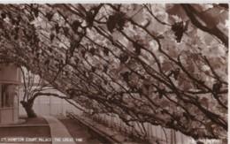 AS44 Hampton Court Palace, The Great Vine - London Suburbs
