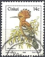 Ciskei, 1986 Upupa Epops, 14c # S.G. 14 - Michel 97 - Scott 17  USED - Ciskei