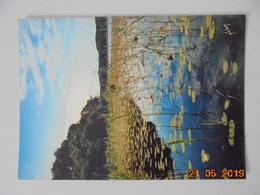 Les Landes. Nenuphars Sur Un Lac Landais. Yvon EKB6459 Postmarked 1967. - France