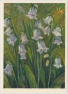 Bart-Glockenblume - 147 - Fleurs