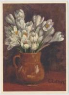 Frühlings-Safran - Fleurs