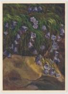 Niedere Glockenblume - Fleurs