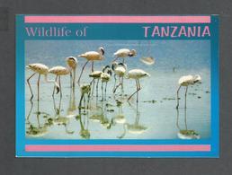 ANIMAUX - ANIMALS - BIRDS - OISEAUX - FLAMINGOS - WILDLIFE OF TANZANIA AFRICA - PHOTO DINO SASSI - Oiseaux