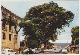1682/ FREETOWN, Sierra Leone. The Cotton Tree.- Voitures Cars Macchine Coches Autos. - Non écrite. Unused. Non Scritta. - Sierra Leone