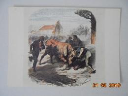 Gravures Anciennes. Course De Vaches Landaises Au Siecle Dernier. Cap Theojac 40.3 - France