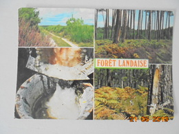 Visage Des Landes. Foret Landaise. Pot De Resine. Vignes Postmarked 1981. - France