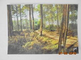 Route Dans La Foret Landaise. Yvon 10 40 0035 Postmarked 1987. - France