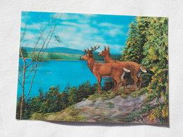 3d 3 D Lenticular Stereo Postcard Deers Toppan Japan 1979   A 190 - Stereoscope Cards