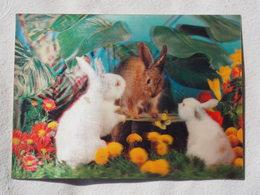 3d 3 D Lenticular Stereo Postcard Rabbits  Toppan Japan 1976   A 190 - Stereoscope Cards