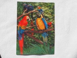 3d 3 D Lenticular Stereo Postcard Parrots  Toppan Japan 1976   A 190 - Stereoscope Cards