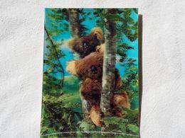 3d 3 D Lenticular Stereo Postcard Koala Bears  1969   A 190 - Stereoscope Cards