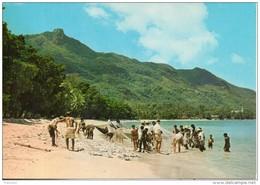 Seychelles. Coup De Filet Des Pecheurs. Grand Format - Seychelles