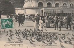 ***   MONACO  ***  MONTE CARLO Pigeons Café De Paris - TTB - Les Terrasses