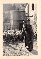 Les BAUX De PROVENCE - Vieux Berger Des Baux - Moutons - Photo G. Augier Carpentras - Les-Baux-de-Provence