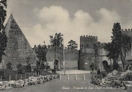 CPAM    ROMA PIRAMIDE DI CAI0  CESTO   401 - Roma (Rome)