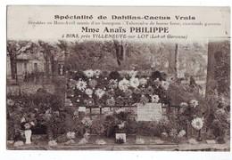 25 RE CPA Bias Fleuriste Anais Philippe Spécialité Dalhias Cactus - France