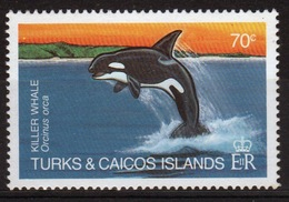 Turks And Caicos 70c Single Stamp From The 1983 Whales Set. - Turks And Caicos