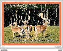 A369/377 Si Tu Porte Des Cornes, C'est De La Faute à Ta Femme - Animaux & Faune