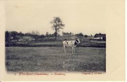 Meerhout  (Omstreken)  Homberg - Meerhout