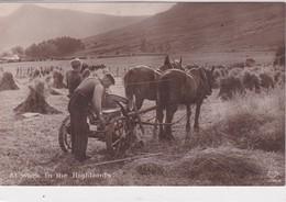 ROYAUME UNI . At Work In The Highlands  ( Scène De Moisson Avec Moissonneuse Et Attelage De Chevaux ) - Teams