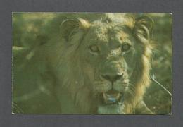 ANIMAUX - ANIMALS - LION - MAGNIFIQUE TIMBRE DE TANZANIA  AFRICA - Lions