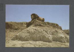 ANIMAUX - ANIMALS - BLACK MANED LION - PHOTO NEIL BAKER - Lions