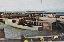 AQ30 Lobster Season On New Brunswick's East Coast - Other