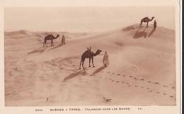 AQ30 Ethnic - Scenes Y Types, Touaregs Dans Les Dunes - LL - Africa