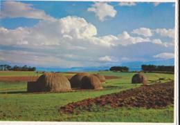 AN16 The Grass Township, Zululand, South Africa - South Africa