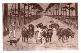 (40) 276, La Lande Pittoresque, Roger Sourgen, C'est La Fete Au Village, Vers Les Arnes Pour Les Courses Landaises, Liza - France