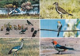 CPM KENYA  African Birds OISEAUX Multivues - Kenya