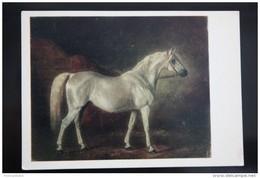 "Sverchkov ""Obeyan Serebryanyi"" -  Old USSR Postcard  - 1973  - The Arabian Or Arab Horse - Rare! - Chevaux"
