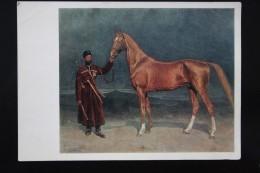 "Willewalde ""Sardar"" -  Old USSR Postcard  - 1973  - Akhal-Teke Horse - Rare! - Chevaux"