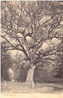 Sénart Forêt Le Chêne Prieur - Sénart