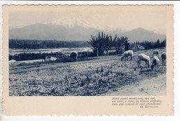 Cpa Carte Postale Ancienne  - Molti Sogni Mentiromo , Ma Voi - Poeme Bertacchi - Cartoline