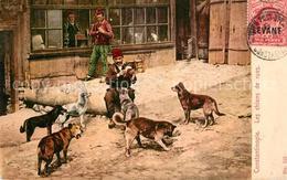 13543402 Constantinopel_Istanbul Les Chiens De Rues Hunde  Constantinopel_Istanb - Turquia