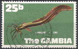 Gambia, 1971 West African Eel Cat, 25b # S.G. 277 - Michel 254 - Scott 259 USED - Gambia (1965-...)