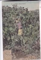 ALGERIE. ETUDE DE CACTUS. COLLECTION IDEALE. CPA OBLITEREE 1907 BOUZAREAH - BLEUP - Scene & Tipi