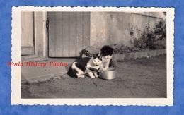 Photo Ancienne Snapshot - Beau Portrait De Chat Autour D'une Casserole - Cat Katze Animal De Compagnie - Objets