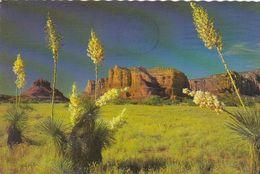 Cp , ÉTATS-UNIS , ALBUQUERQUE , Spanish Bayonet, Desert Yucca, Is  Beautiful Specimens Of Desert Vegetation - Albuquerque