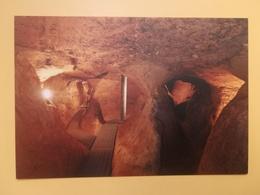 CARTOLINA POSTCARD NUOVA ITALIA ITALY TOSCANA SIENA CHIUSI SOTTO IL MUSEO DELLA CATTEDRALE LABIRINTO DI PORSENNA - Siena