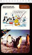 Humour Bébés Manchots / Animal Manchot / Manchots Empereurs Au Pôle Sud  / D36 - Old Paper