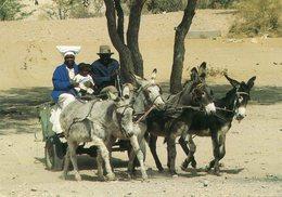 Namibia - Donkey Express - Namibia