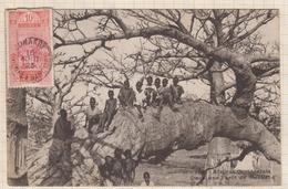 9AL1333 Afrique Occidentale Dans Une Fôret De Baobabs N° 305 De 1923 2 SCANS - Guinea