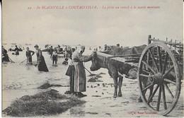 BLAINVILLE à COUTAINVILLE  : La Pêche Au Varech à La Marée Montante (1914) - Blainville Sur Mer