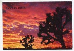 USA - AK 350149 Arizona - Sunset In The Joshua Tree Forest - Etats-Unis
