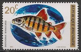 Distichodus Sexfasciatus (Poisson) - Rwanda - 1973 - Rwanda